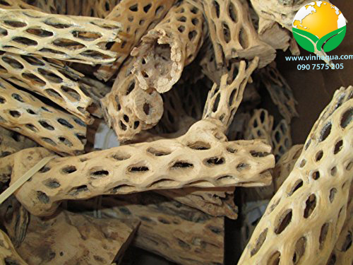 Lũa cholla trang trí cho hồ thủy sinh nuôi tép