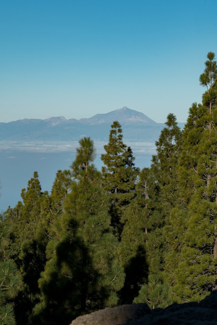 Roque Nublo  Kurze Rundwanderung auf Gran Canaria  Wandern-Gran-Canaria 05