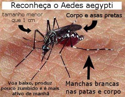 imagens e fotos do mosquito da dengue e zica vírus