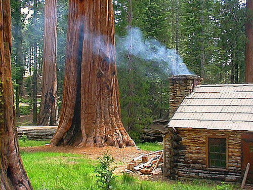 Dream House Of The Day Redwood Forest Cabin