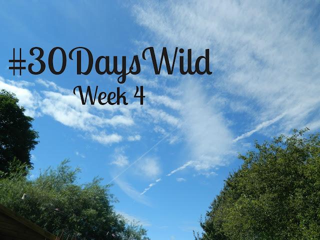 30 Days Wild Challenge | Week 4