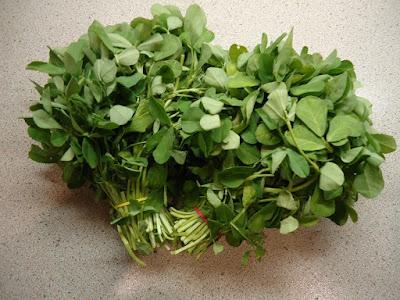 Image result for मेथी एक वनस्पति है