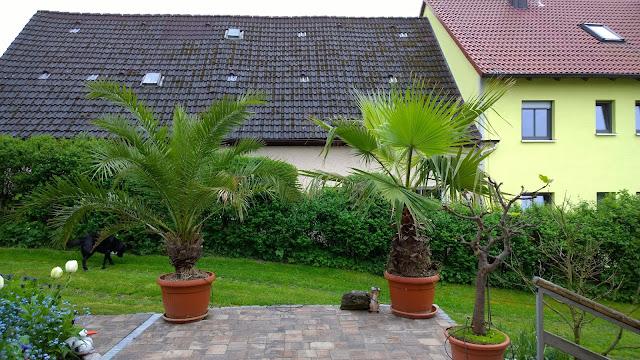 Terrasse vor dem Haus (c) by Joachim Wenk
