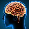 Ini Dia 13 Makanan Yang Baik Untuk Kesehatan Otak
