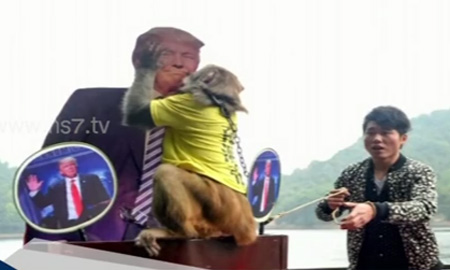 China monkey's prediction on US election 2016