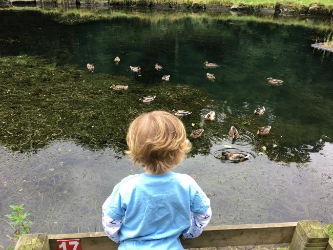 toddler-watching-ducks-cwm-carn-forest