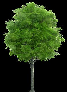 tree fhd