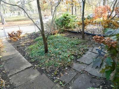 Toronto Cabbagetown Fall Front Yard Garden Clean up by Paul Jung Gardening Services after