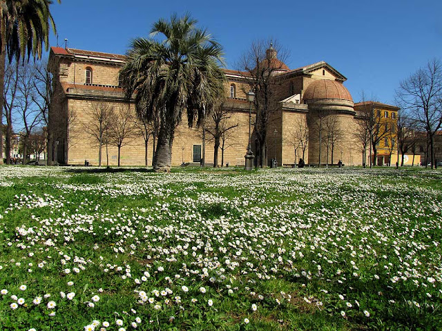 Grass full of daisies, Livorno