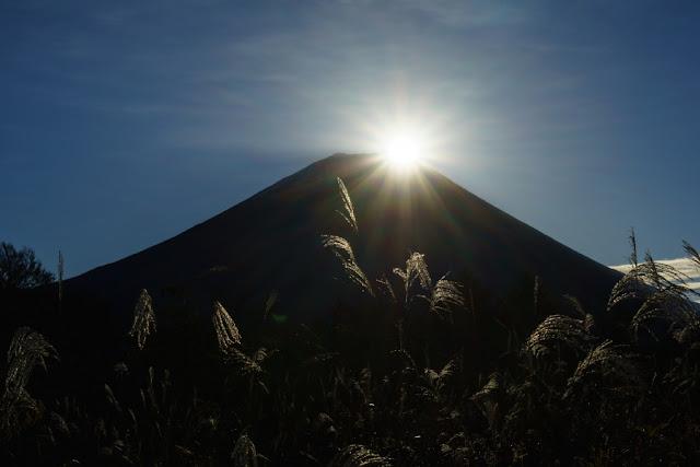 朝日のダイヤモンド富士とススキ~富士ヶ嶺(山梨)