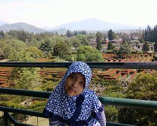 Pesona Keindahan Taman Bunga Nusantara Cipanas Jawa Barat