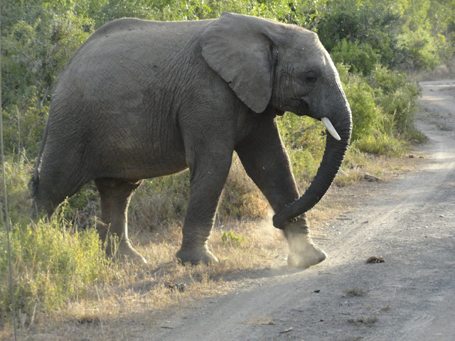 "CATCHING ""THE BIG FIVE"" IN THE SHAMWARI GAME PARK"