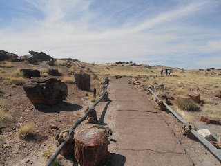 petrified forest hiking trail