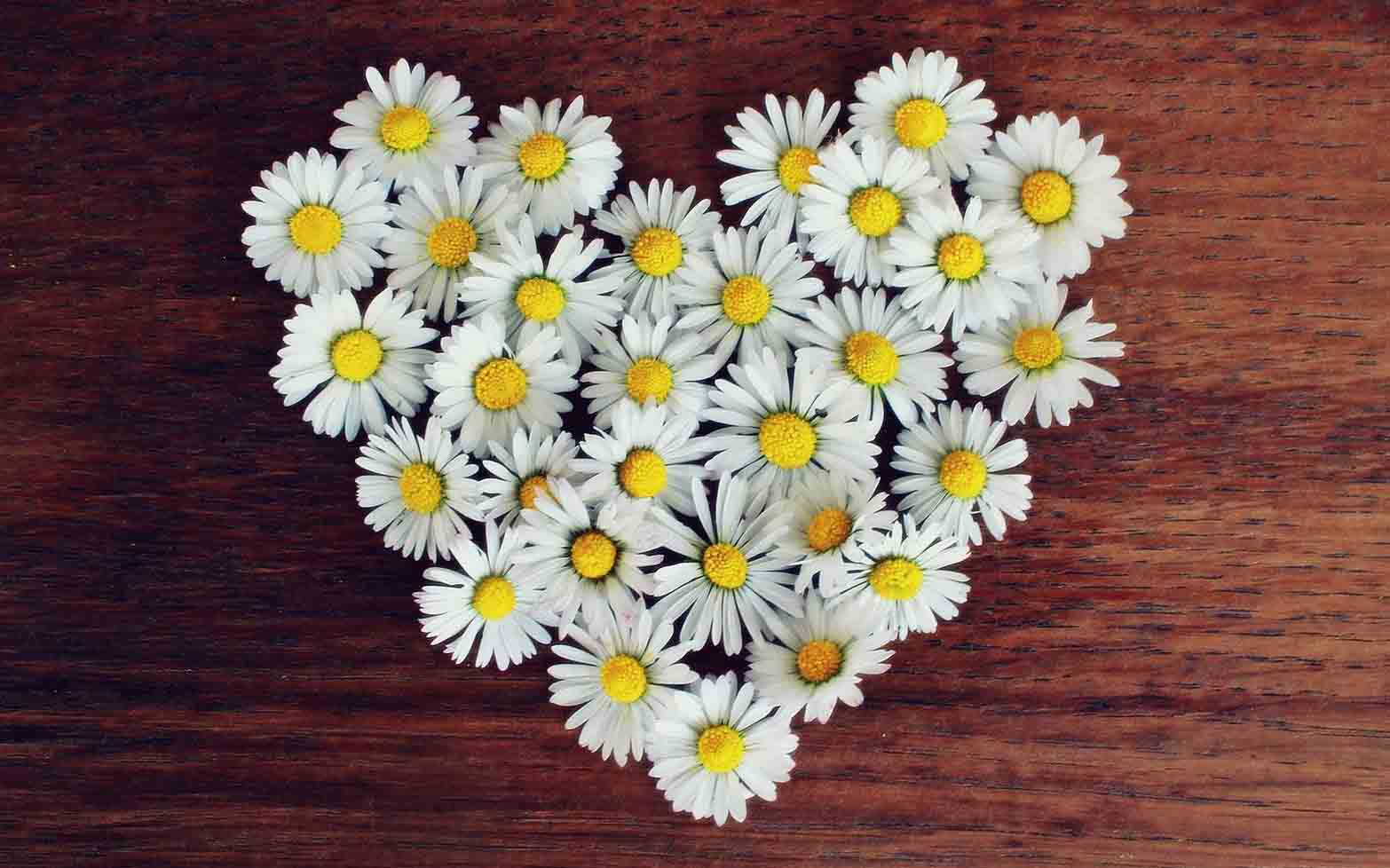 Whatsapp profile pic flowers images higtwallaper hd beautiful flower images for whatsapp profile dp funny izmirmasajfo