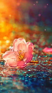 florecilla-de-petalos-rosa-sobre-superficie-mojada