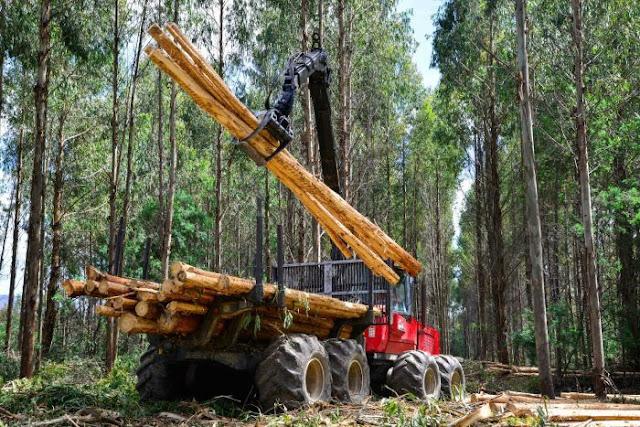 10 Cara Melestarikan Hutan Agar Tetap Terjaga Dengan Baik