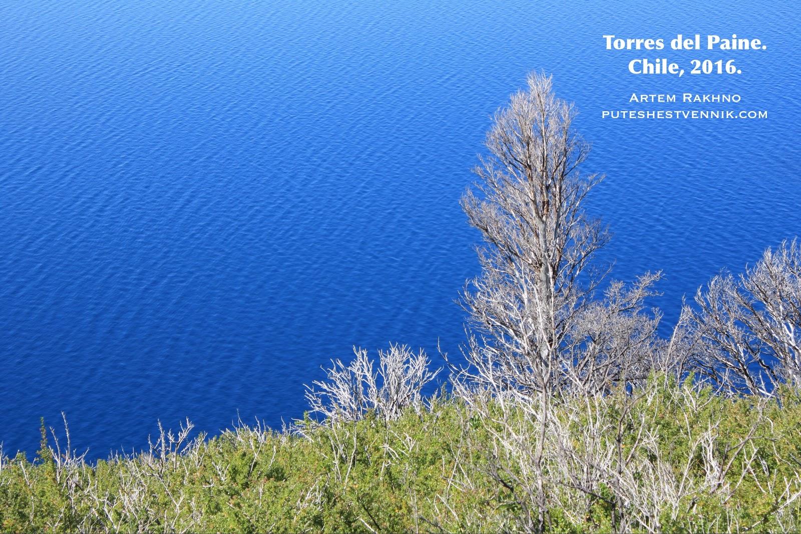Дерево на фоне синего озера в Торрес-дель-Пайне