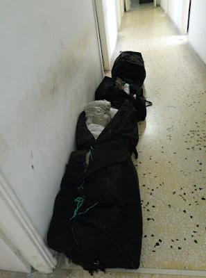 Εντοπίστηκαν σε δασώδη περιοχή στους Αγίους Πάντες Φιλιατών Θεσπρωτίας, 63 κιλά κάνναβης