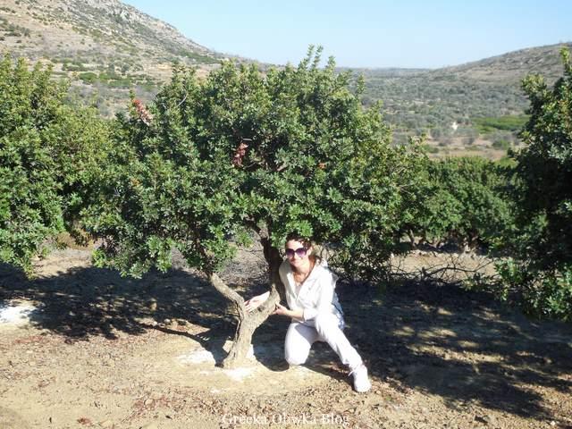 uśmiechnięta, ubrana na biało dziewczyna pozuje do zdjęcia pod drzewem mastichowym