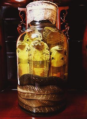 rượu rắn