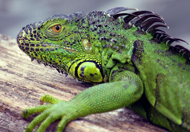 Jenis-jenis Reptil di Dunia dan Cara Mereka Makan