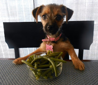 can-dogs-eat-green-beans