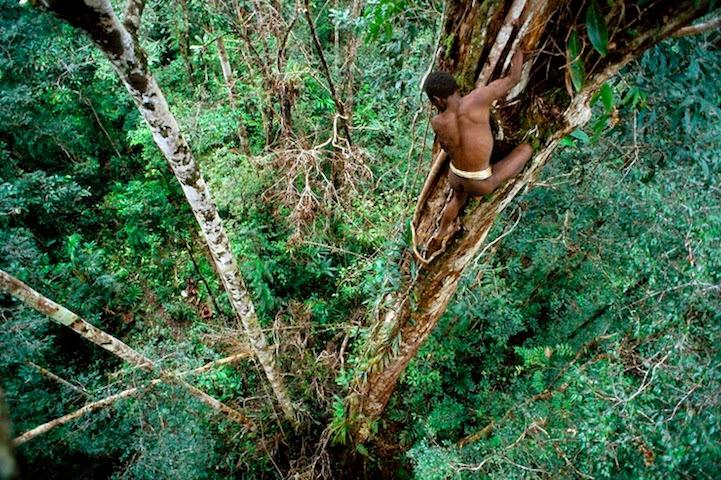 un hombre de piel oscura de la tribu korowai sube hacia la casa en el árbol
