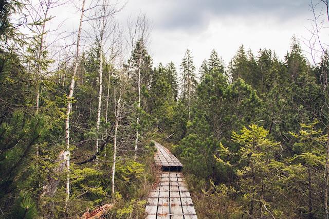 Rundtour durchs Hochmoor im Nationalpark Bayerischer Wald 02