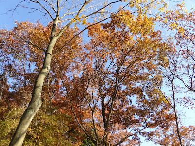 白旗池付近の紅葉