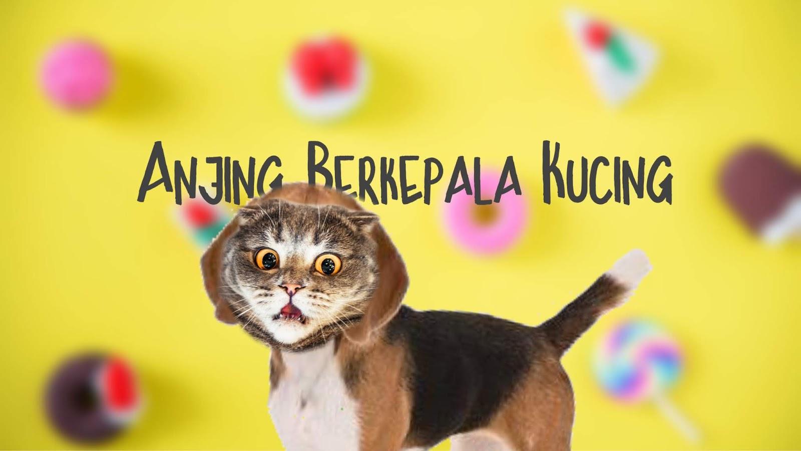 91 Gambar Gambar Kucing Untuk Anak Sd Kekinian