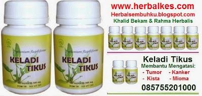 KELADI TIKUS | Kapsul | Jual | Murah | Surabaya | 085755201000