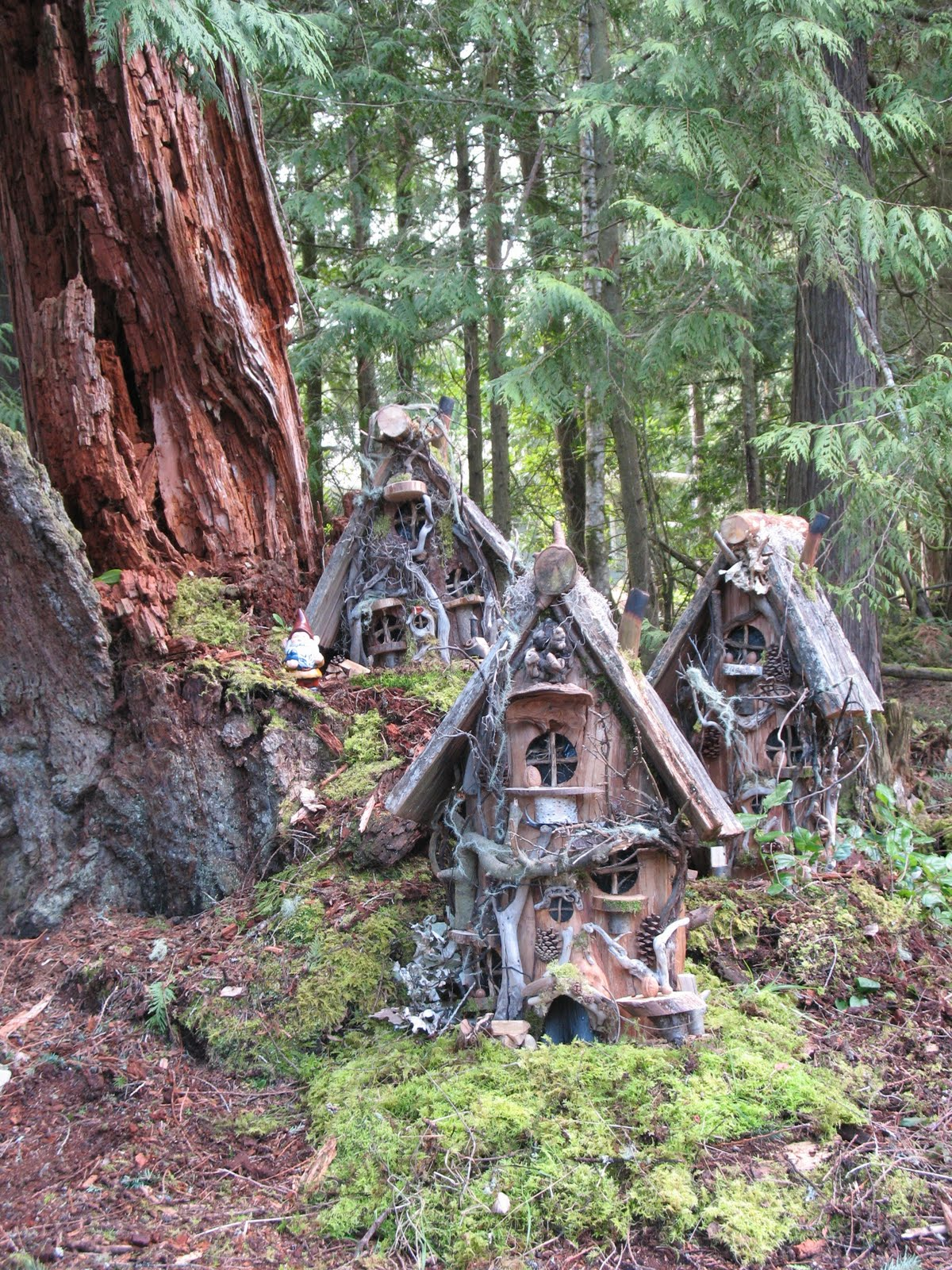 Gnome stories at whimsical woods gnome homes on a big old cedar stump