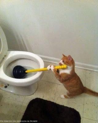 Lustiges Haustier Bild - verstopfte Toilette