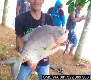 Essen Tenggiri Ikan Bawal