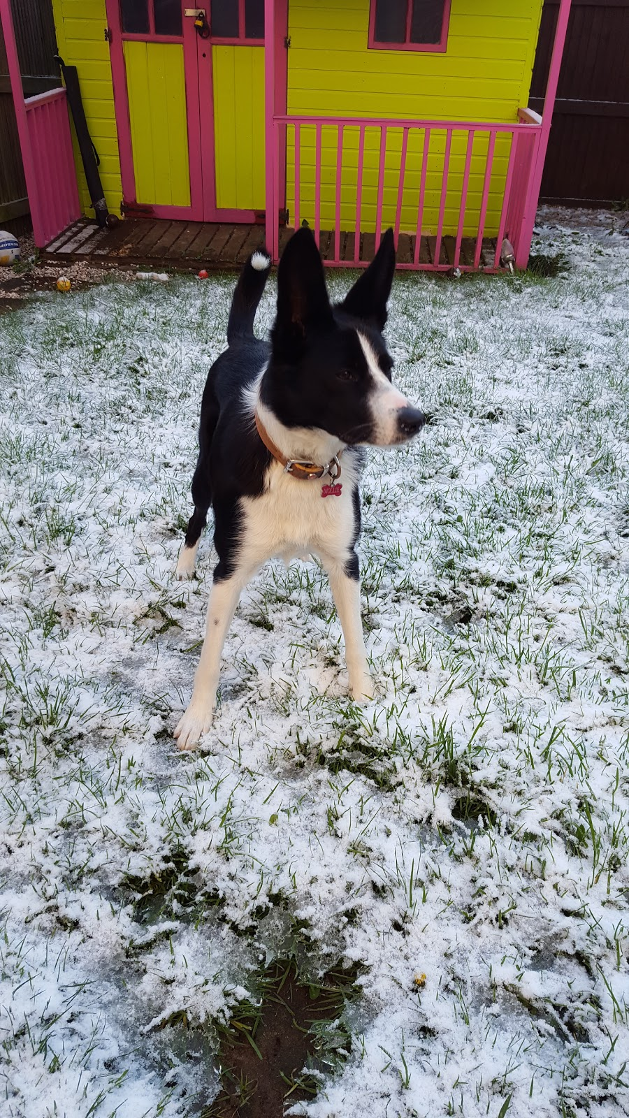 Mollie And The Snow