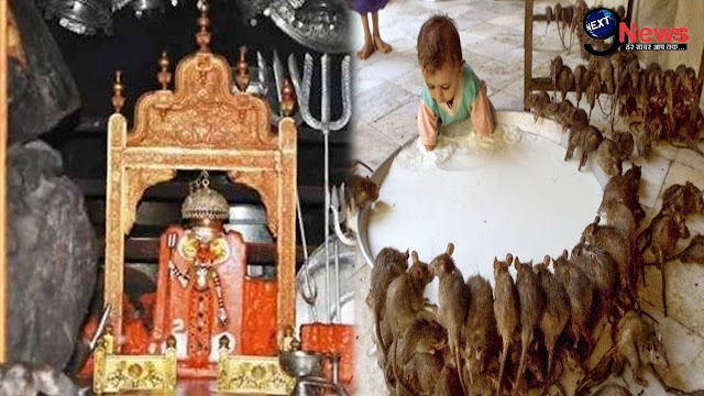 indiaIndia Bikaner Rat Temple,  Deshnok Karni Mata,  Charan caste Radjastan,  Karni Mata Temple,  CharanBikaner (City\/Town\/Village), IndiaHinduRajasthanKarni Mata, Deshnok, casteRat temple, Rat మూషికాలయం | కర్ణిమాత | Karni Mata Temple | Karni Mata Temple is a Hindu temple dedicated to Karni Mata at Deshnoke, 30 km from Bikaner, in Rajasthan, India. It is also known as the Temple of Rats