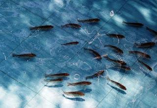 Budidaya Ikan yang Menguntungkan