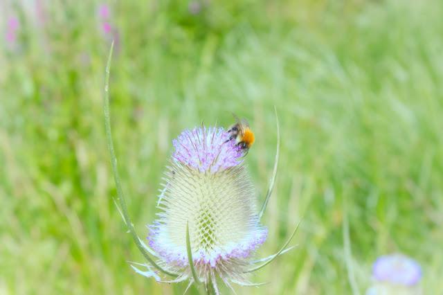 bee flower magic