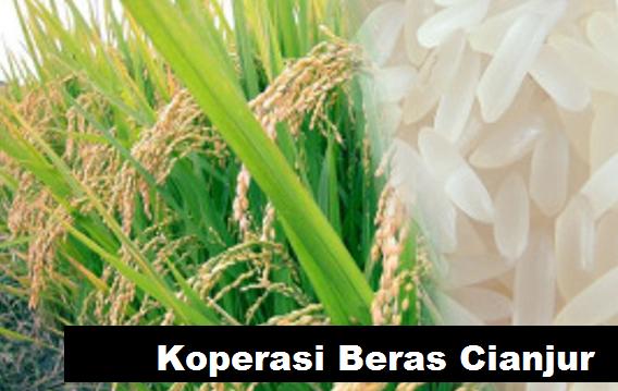 distributor beras cianjur