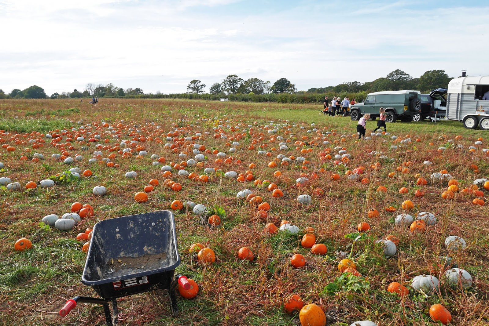 Little pumpkins at the Sevington pumpkin patch, Ashford