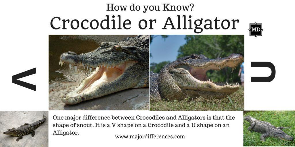 crocodile vs alligator Mistaking an alligator for a crocodile and vice versa is fairly common read the following article to understand how the distinction can be done with just a couple of.