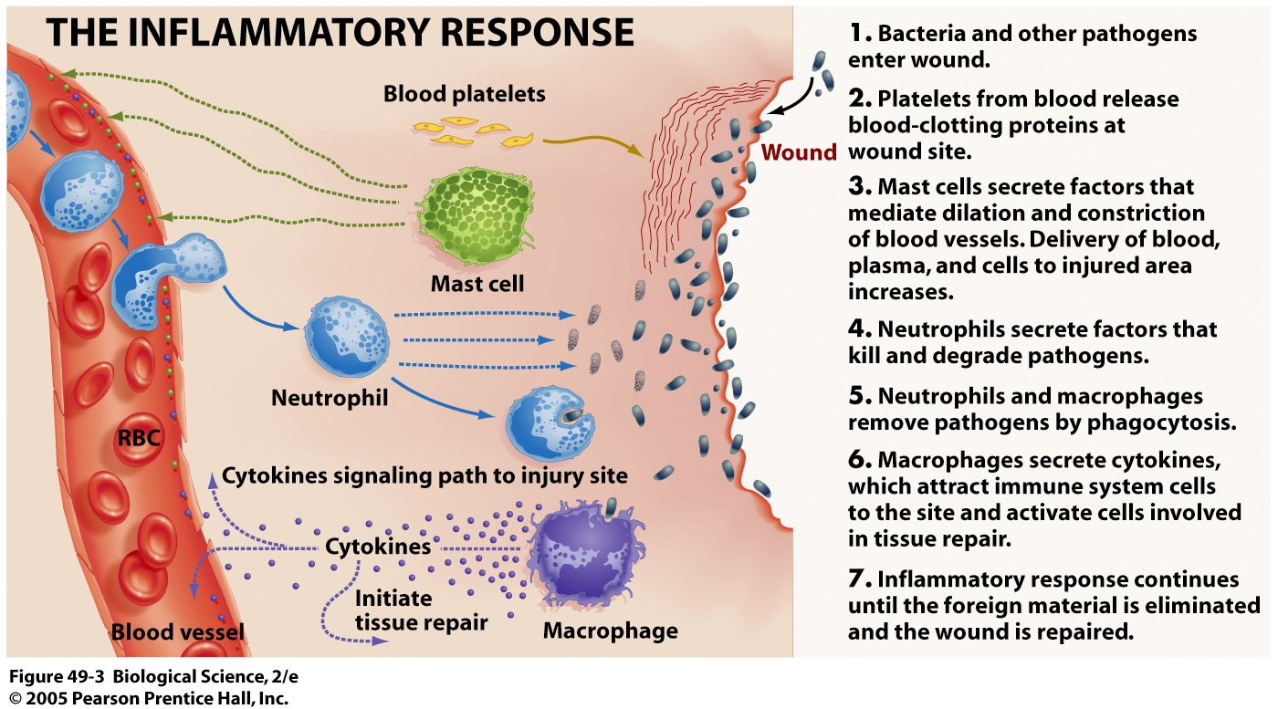 Terapi Obat Second Line Dmarc Disease Modifying Anti