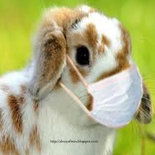 Inilah Bermacam jenis Penyakit pada kelinci!