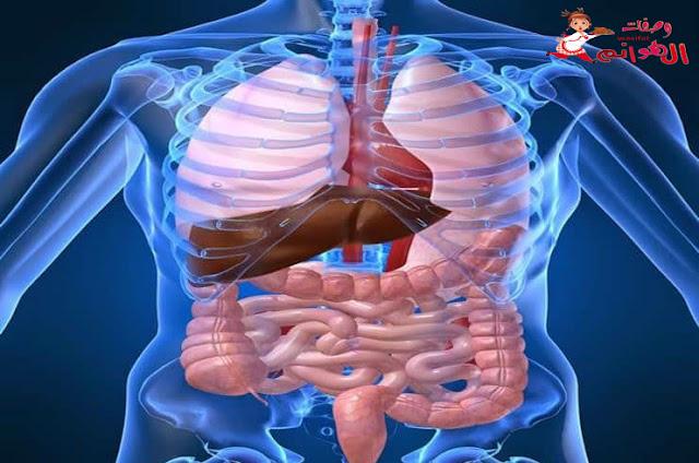 4 أعضاء في داخل جسم الإنسان يمكن أن يعيش حياة طبيعية بدونهم