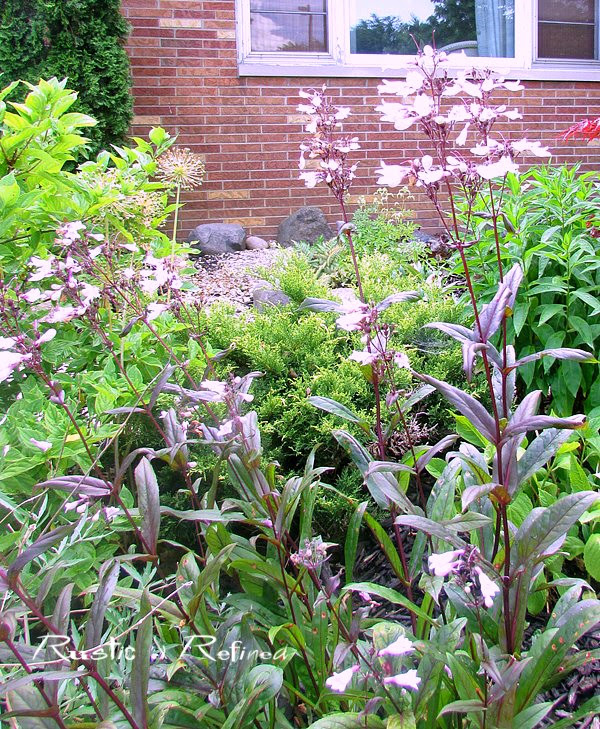 Best perennials for the garden - beardtongue