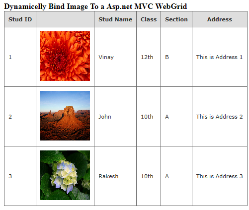 Code To Dynamically Bind Image To Asp.net MVC WebGrid