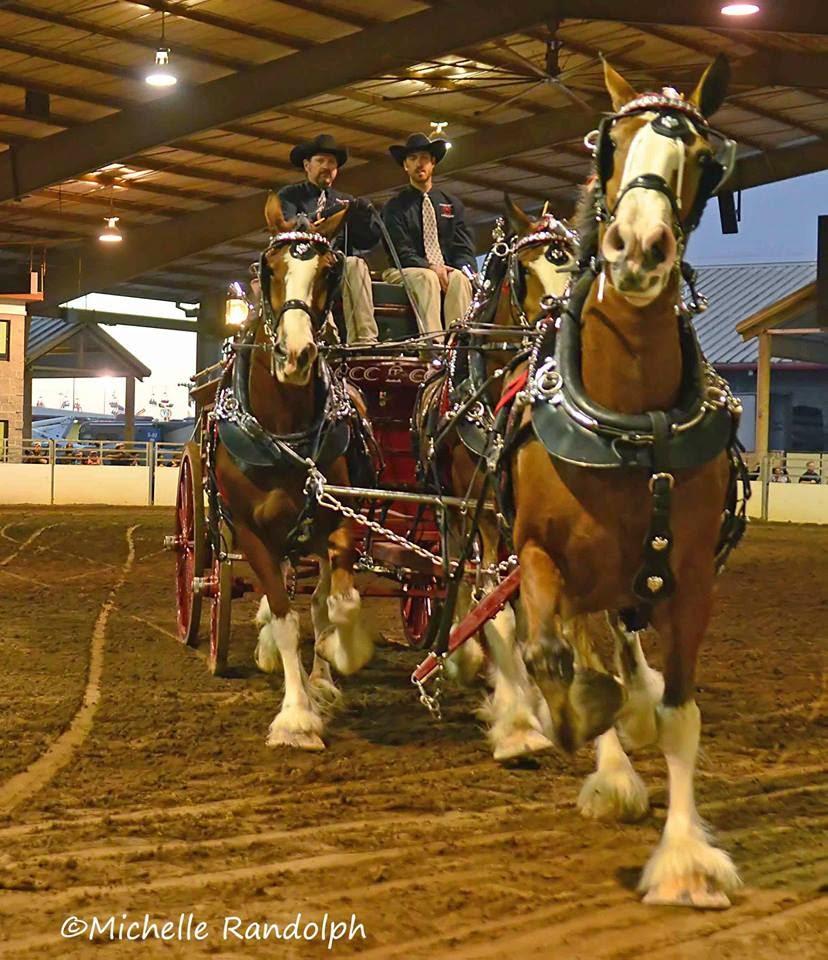 CLYDESDALE, CLYDESDALE HORSE, CLYDESDALE FOR SALE, DRAFT HORSE