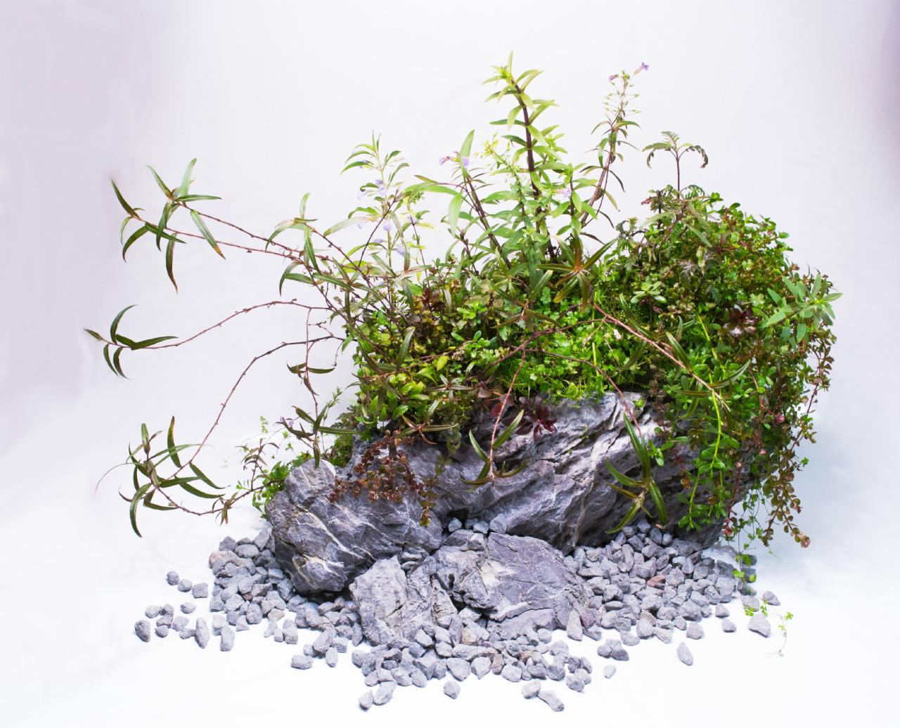 Rất nhiều cây thủy sinh được kết hợp trong Wabikusa