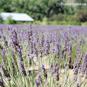 The Lavender Farm-My Life List