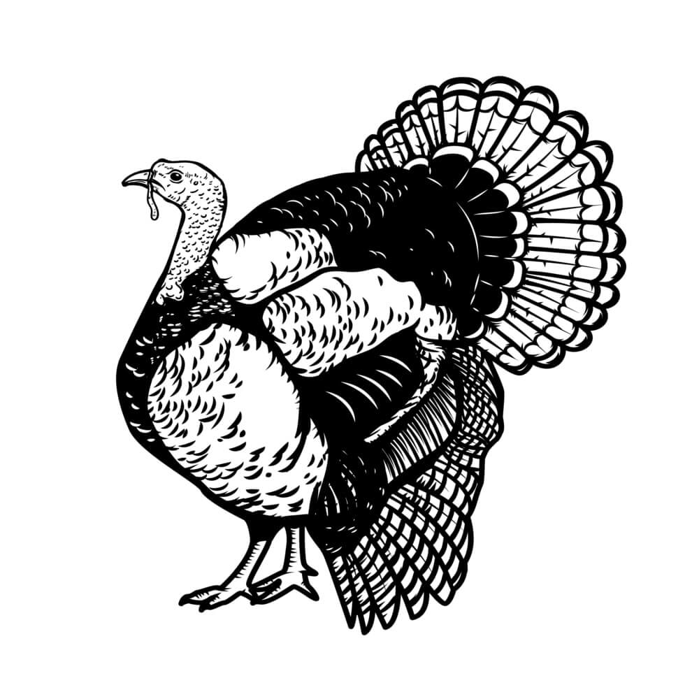 Thanksgiving Turkey Images